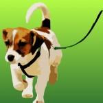 Hund an der Leine1